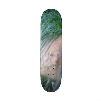 Mushroom. Skate Deck