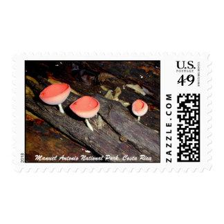Mushroom Spiders, Manuel Antonio National Park Postage