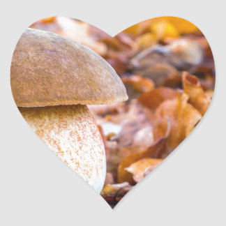Mushroom squirrel bread with leaves in fall.JPG Heart Sticker