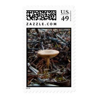 Mushroom Stretch Postage Stamp