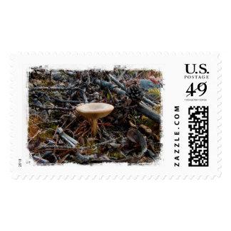 Mushroom Stretch Postage