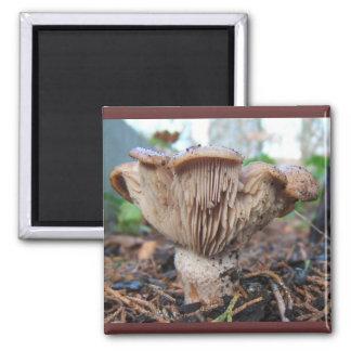 Mushroom under Cedar ~ magnet