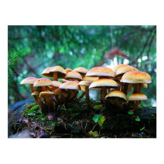 mushroom village postcard