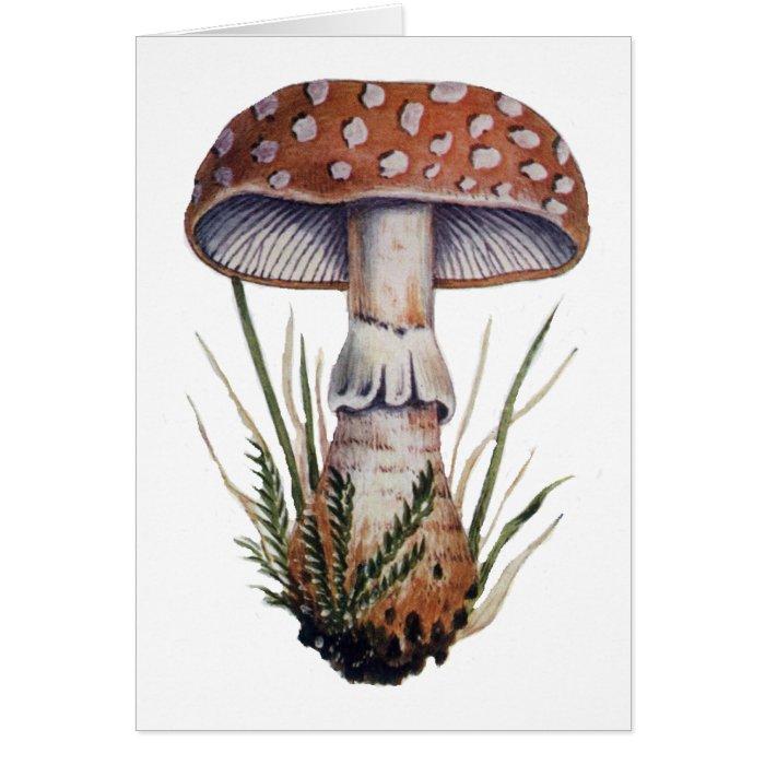 Mushroom Vintage Print Amanita Rubescens Fungus Card