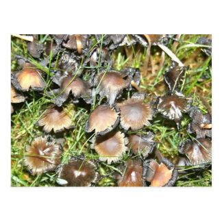 Mushroom with curled edges  Post Post Card