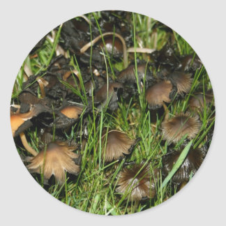 Mushroom with curled edges  Stickers
