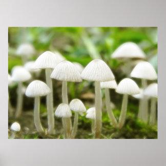 Mushroom World Poster
