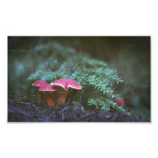 Mushrooms and Hemlock (Print) Photographic Print