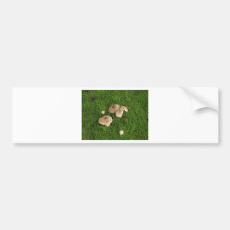Mushrooms Bumper Sticker