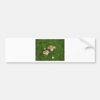 Mushrooms Bumper Sticker