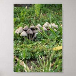 Mushrooms by Devin Michael Figueroa Poster