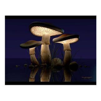 Mushrooms by J. Matthew Root Postcard