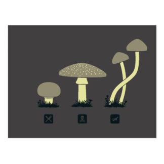 Mushrooms (food, poison, high) postcard