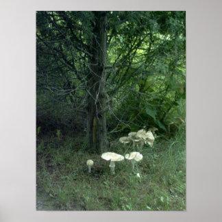 Mushrooms for Pat Poster