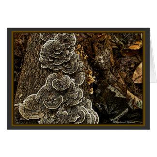 mushrooms greeting cards