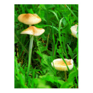 Mushrooms In Kawarthas Postcard