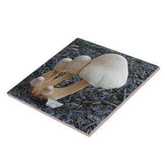 Mushrooms in Mulch - Leucoagaricus americanus Ceramic Tile