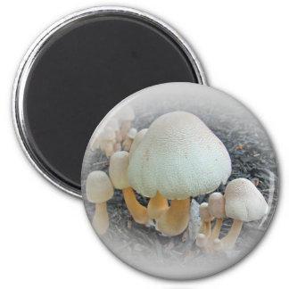Mushrooms in Mulch - Leucoagaricus americanus Magnet
