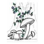 Mushrooms & Morning Glories postcard