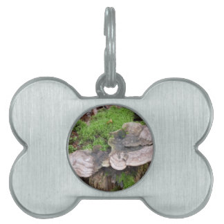 Mushrooms on a tree trunk pet tags