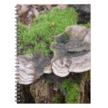Mushrooms on a tree trunk spiral note book