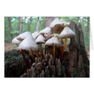 Mushrooms on an Old Stump Notecard Stationery Note Card