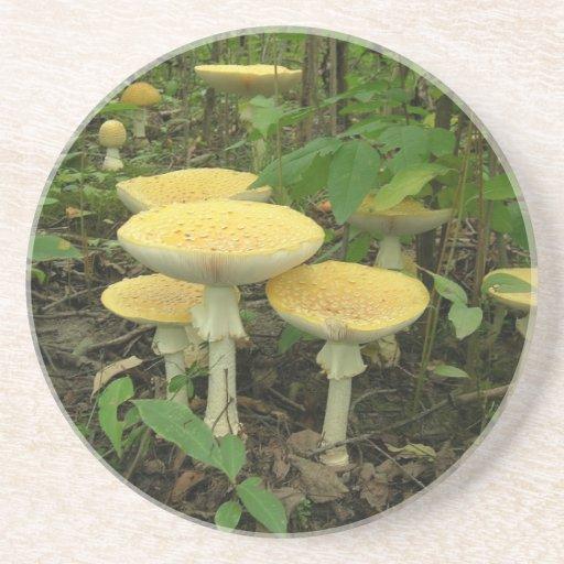 Mushrooms On The Forest Floor Drink Coaster
