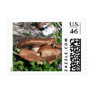 Mushrooms Postage Stamp