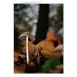 Mushrooms under trees greeting cards
