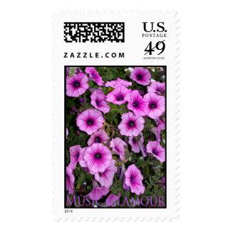 music glamour petunias postage stamp