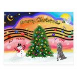 Música 2 del navidad - caniche (estándar de plata) postales
