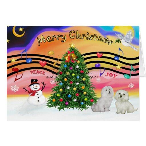 Música 2 del navidad - maltesa (dos) tarjeta de felicitación