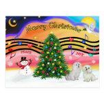 Música 2 del navidad - maltesa (dos) tarjeta postal