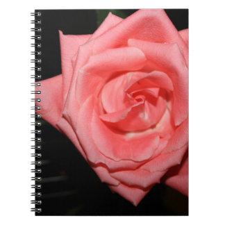 música color de rosa rosada de la parte posterior libretas