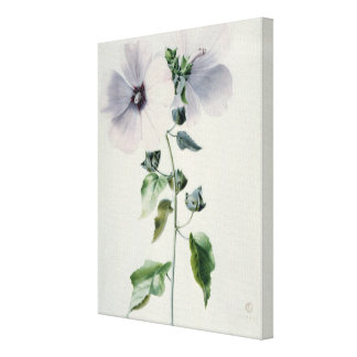 Musk Mallow 18th century Stretched Canvas Print