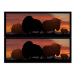 Musk Ox bookmarkers Postcard