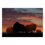 Musk Ox Greeting Cards