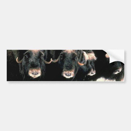Musk Oxen Bumper Sticker
