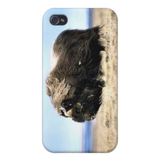 Musk Oxen iPhone 4/4S Case