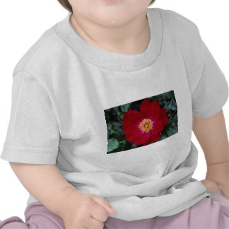 Musk Roses T Shirts