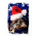 Musk turtle mouth open santa hat christmas  pic post cards