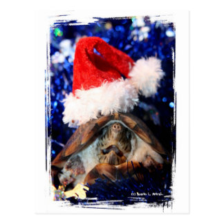 Musk turtle mouth open santa hat christmas  pic postcard