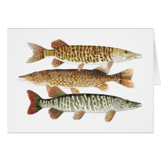 Muskie,Pike & Tiger Card