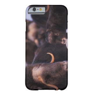 muskox, moschatus del Ovibos, vaca con recién Funda Para iPhone 6 Barely There