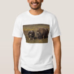 muskox, Ovibos moschatus, bull and cow on the T Shirt