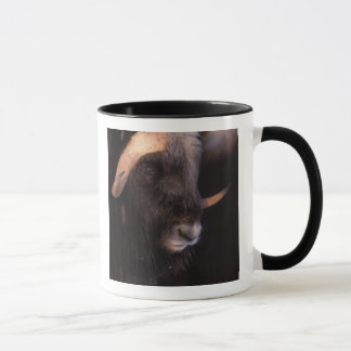 muskox, Ovibos moschatus, bull on the central Mug