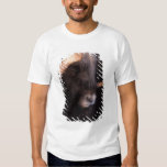 muskox, Ovibos moschatus, bull on the central Tee Shirt