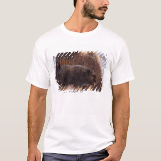 muskox, Ovibos moschatus, cow and newborn calf 2 T-Shirt