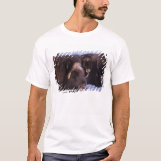 muskox, Ovibos moschatus, cow and newborn calf T-Shirt