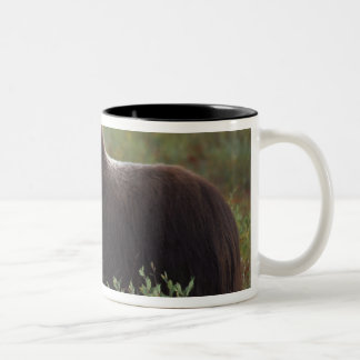 muskox, Ovibos moschatus, cow on the central 2 Two-Tone Coffee Mug